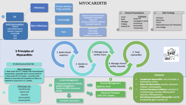 Cardionerds Myocarditis Infographic