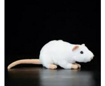 Selling White Healthy Rats