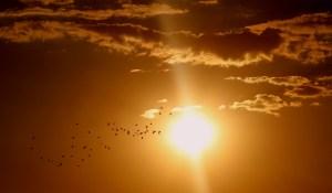 sun view