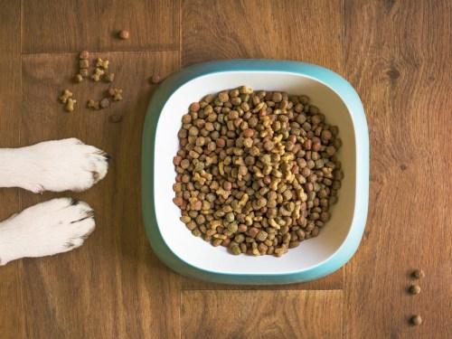 Top Hypoallergenic Dog Food Brands