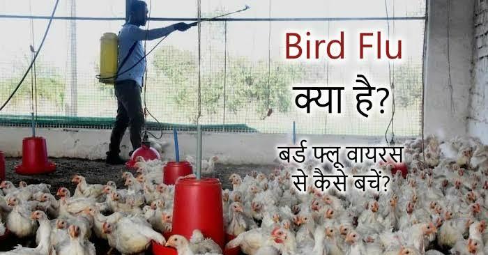 Bird Flu kya hai