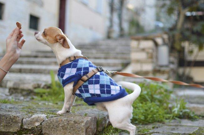 Puppy training food