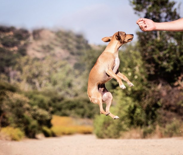 rewarding dog