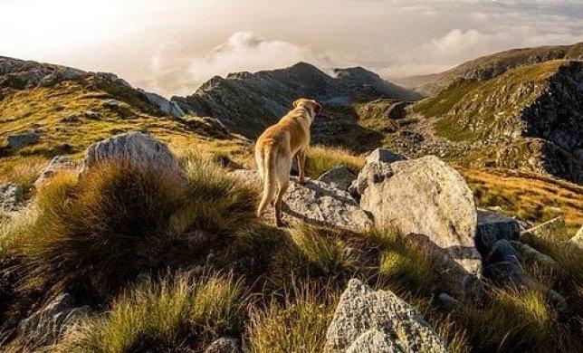 Dog on the mountain