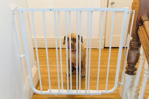 dog gate for baby