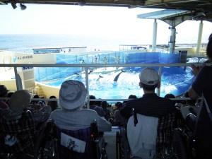 新江ノ島水族館-04
