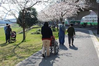 4月桜花見・おやつレク