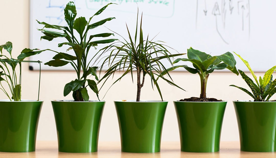 Plant Wellness in Your Workspace