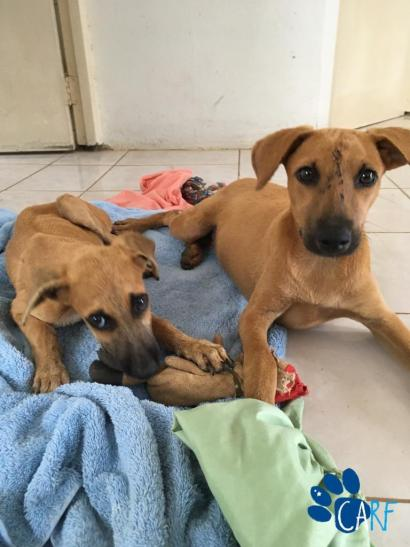 Two dogs rescued from under shipping container in Curaçao