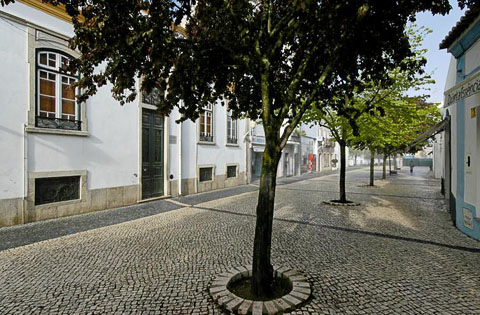 Tree-Lined Narrow Street