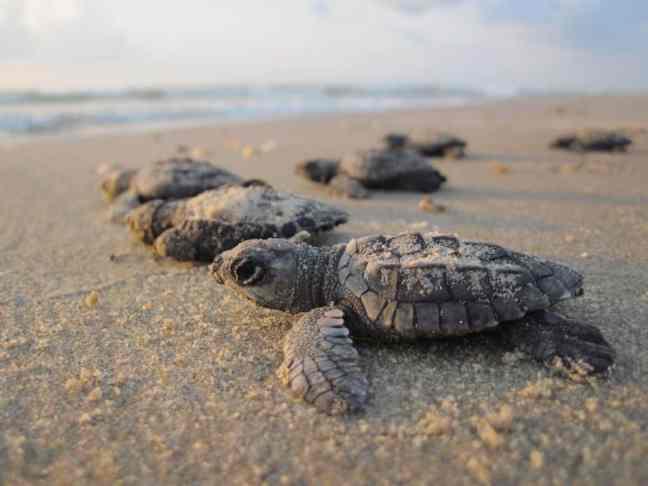 Explore a Texas National Park site like Padre Island National Seashore.