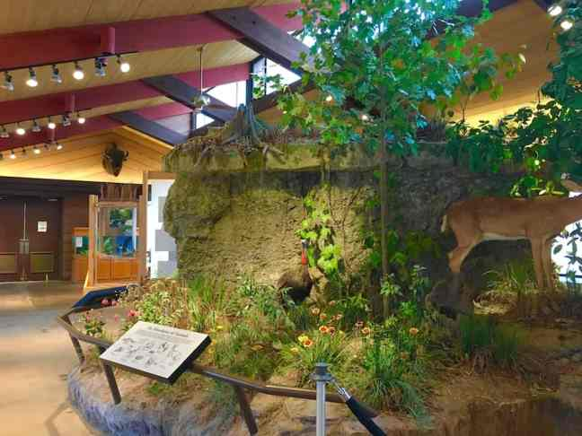 Explore the Travertine Nature Center in Chickasaw National Recreation Area as one of the things to do in Sulphur.