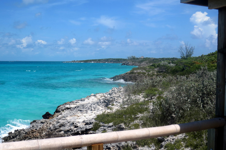 Typical Shoreline in the Exuma Cays (Photo by Carolyn Wardle)