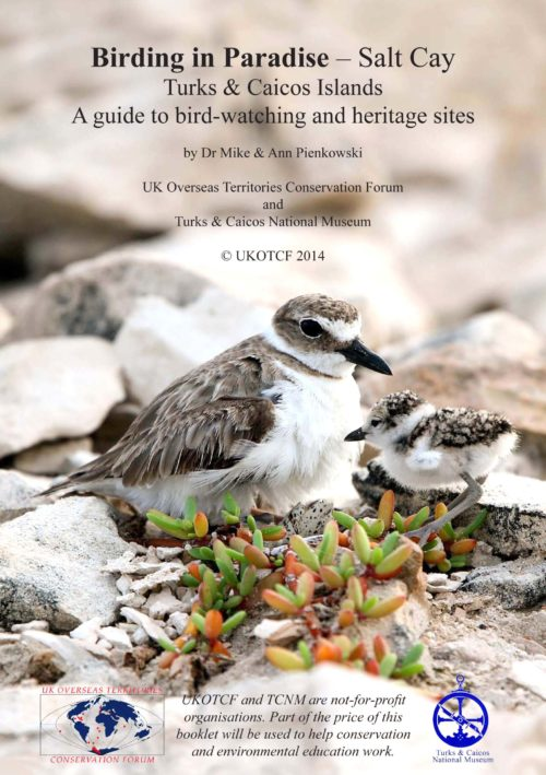 Wilson's Plover rises from the two eggs that it is still incubating so that one of its first chicks to hatch can be brooded as well (Photo by Dr. Mike Pienkowski)