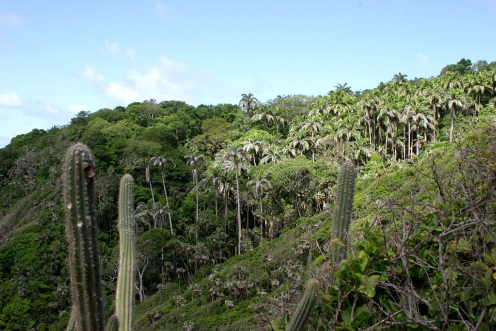 Semi-deciduous Vegetation of Little Tobago