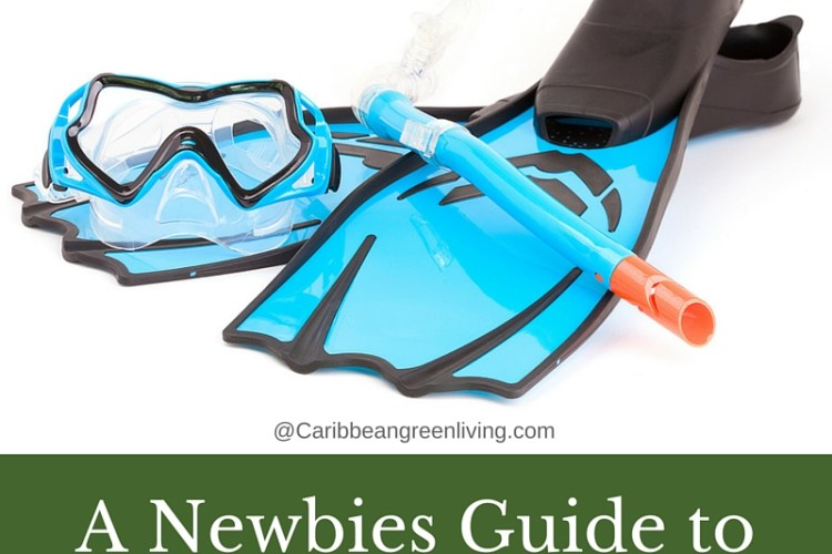 A Newbies Guide to Snorkeling