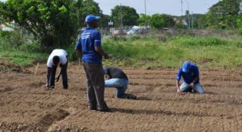 UG student embark on onion research project in Berbice