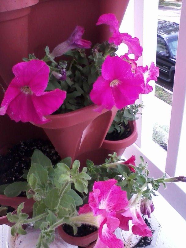 Flowers on Caridad's Balcony