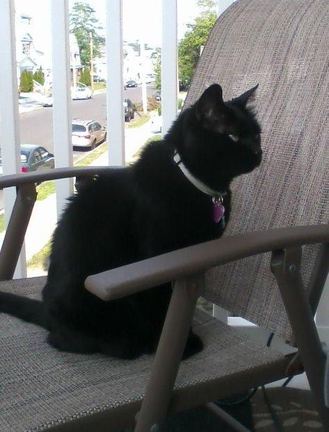 Orisis my family cat
