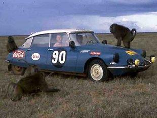 Guy Verrier, futur patron de Citroen Sport, au volant d'une DS, lors de l'EAST African Safari 1965