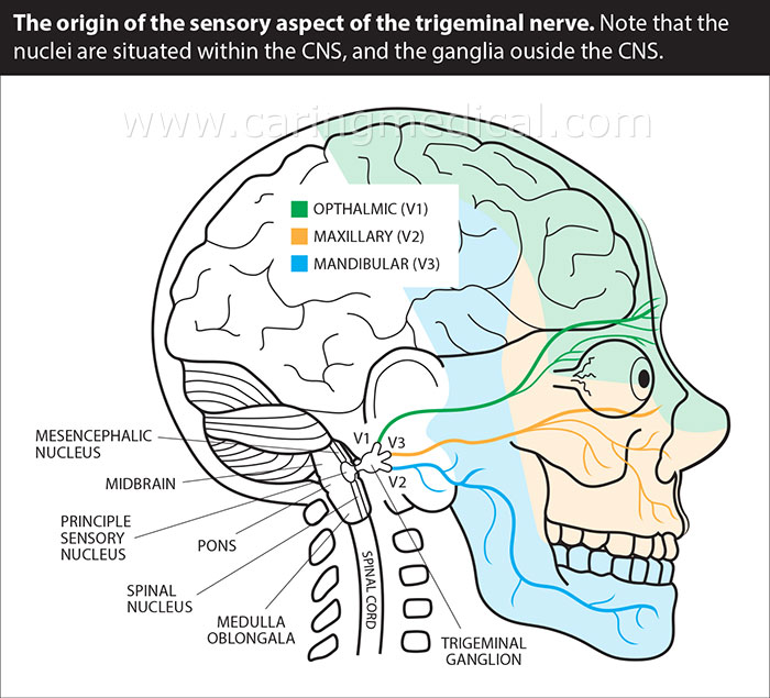 trigeminal nerve diagram guitar wiring 2 humbucker 1 volume tone the evidence for neuralgia non surgical treatments