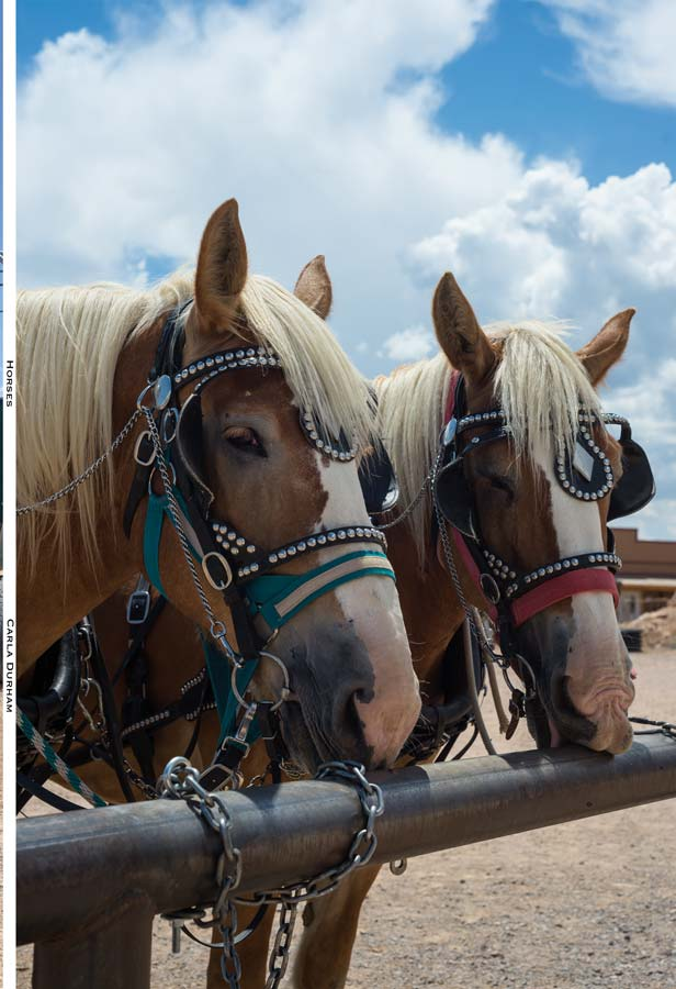 Photo of horses at Grand Canyon on the front cover of Horses: Blank Lined Journal