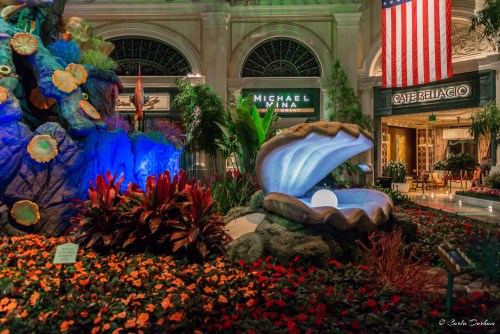 The Conservatory and Botanical Gardens of Bellagio Las Vegas hotel and casino - Photographer Carla Durham- 50 Cities and counting