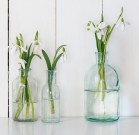 White spring flowers snowdrops in vintage glass bottles on white barn wall background, cottage interior decoration
