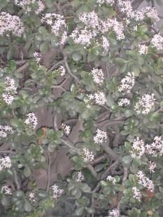 20060108Sevilla6
