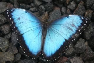 20101225Costa Rica7