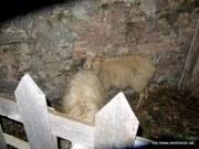 2012_01_05-Curcuraci-Presepe_Vivente-36