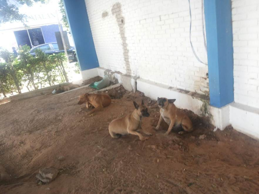 cachorros-centro-petrolina
