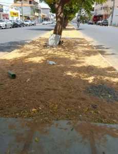 revitalizacao-avenida-sao-francisco
