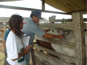 vacinacao-febre-aftosa-adagro