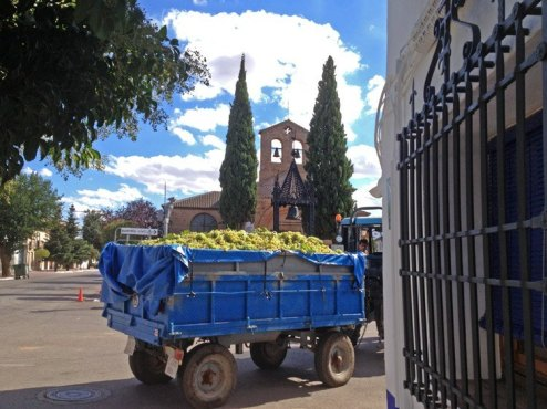 Puerto Lápice - Vendimia