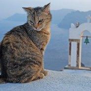 SANTORINI--Gato-(19)