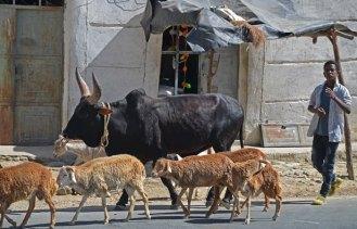 En las carreteras; más ovejas y vacas que coches