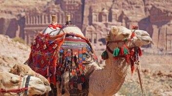 Camello con las Tumbas Reales al fondo