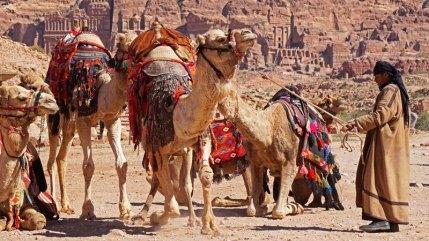 Camellos y Tumbas Reales