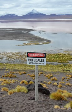 Los bofedales son abundantes en el altiplano