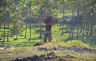 Cocoteros de Polinesia junto a los moais