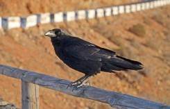 Mirador de las Peñitas - Cuervo