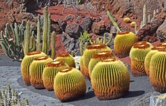Cactus de México