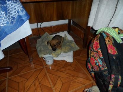 Tina de polizón en el hotel de Villa de Leyva