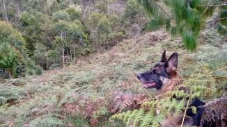Lola inspeccionando el paisaje