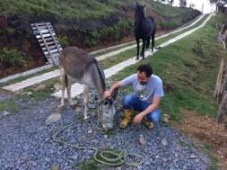 Orión observa asombrado la llegada de la nueva integrante de la manada.