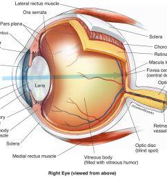 eye anatomy human eyeball lateral rectus muscle medial rectus muscle  [ 1200 x 1008 Pixel ]