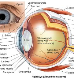 anatomical diagram of the human eye [ 1200 x 816 Pixel ]