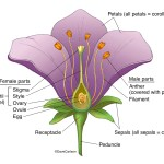Botany Carlson Stock Art