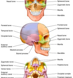 illustration human skull labeled and color coded bones photo [ 834 x 1200 Pixel ]